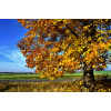 Herbst_by_Andreas Hermsdorf_pixelio.de<div class='url' style='display:none;'>/</div><div class='dom' style='display:none;'>tablat.ch/</div><div class='aid' style='display:none;'>66</div><div class='bid' style='display:none;'>209</div><div class='usr' style='display:none;'>53</div>